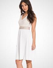 Elise Ryan Lace Half Sleeve Dress