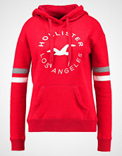 Hollister Co. CORE  Hoodie red